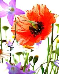 WiesenblumenW blog