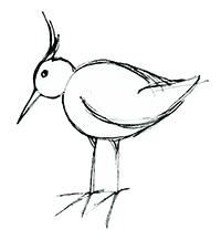 skizze, vogel, schwarz-weiß, inkling