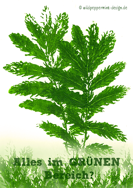 grün, nachhaltig, umeltfreundlich, nachhaltige Werbung / © wildpeppermint-design.de