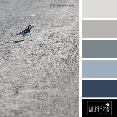 Farbpalette Bachstelze, grau, wildpeppermint-design.de