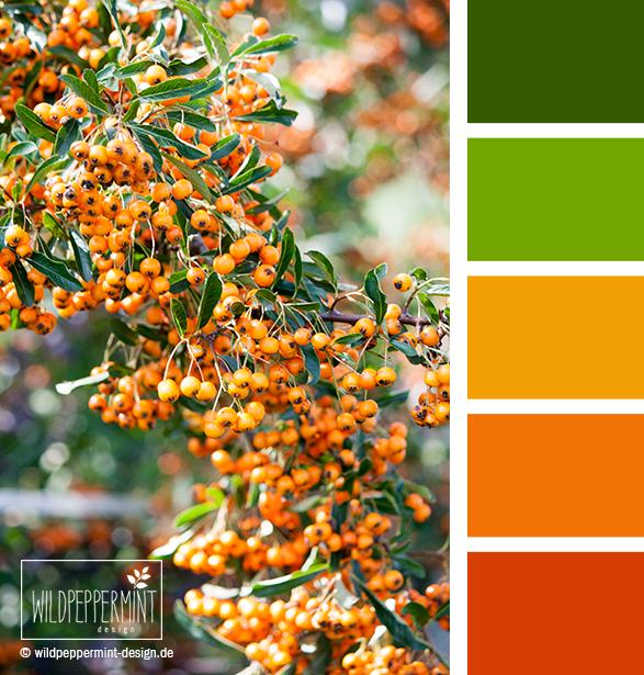 Farbpalette Feuerdorn, Farbinspiration Orange als Basis, Farben fürs Corporate Design, Farbinspiration CI, Orange, Grün, Leuchtende Farbpalette, wildpeppermint-design.de
