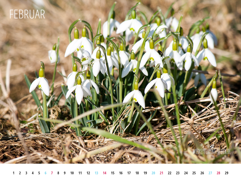 Gratis Download, Wallpaper, Kalenderblatt Februar 2016 1024 X 768, wildpeppermint-design.de