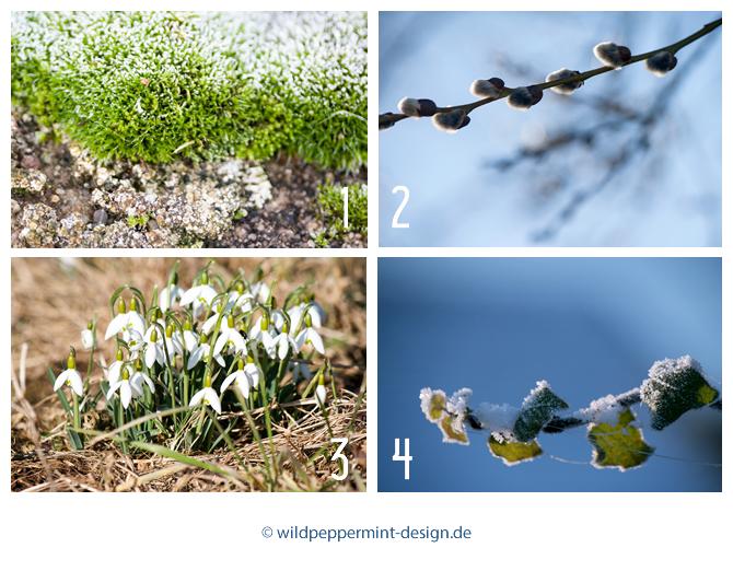 Gratis Wallpaper Kalenderblatt Februar 2016, Naturmotive Februar, wildpeppermint-design.de