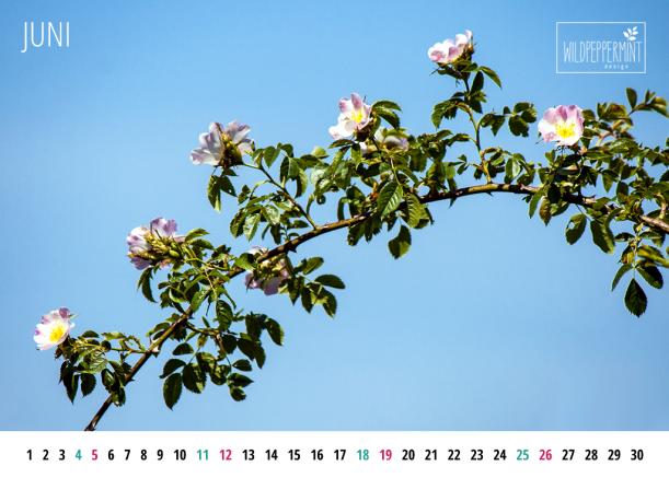 Gratis Wallpaper, Kalenderblatt Juni 2016 1024x768, wildpeppermint-design.de