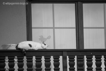 katze hält mittagsschlaf, sw-foto, wildpeppermint-design.de