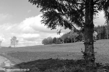wolkenberge, himmel, fichte, frühling, sw-foto, wildpeppermint-design.de