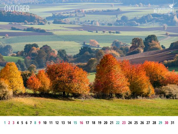 Gratis Wallpaper, kalenderblatt-oktober-2016-1024x768, © wildpeppermint-design.de