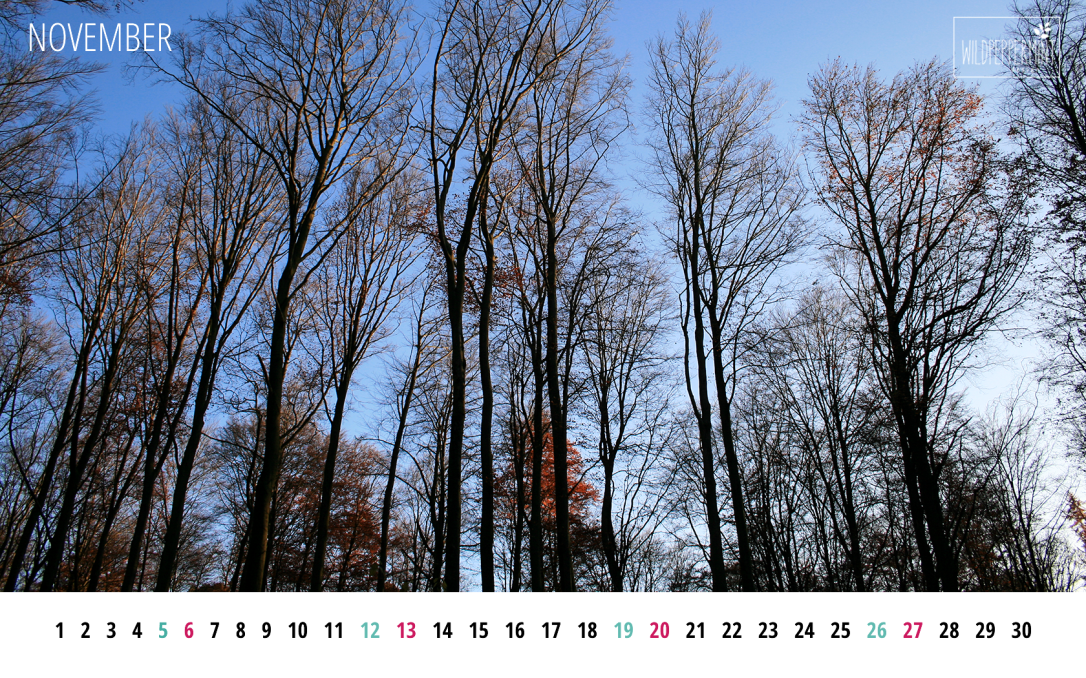 Gratis Wallpaper November, Wald im November, Wallpaper zum Download, Bildschirmhintergrund Naturmotive, wildpeppermint-design.de