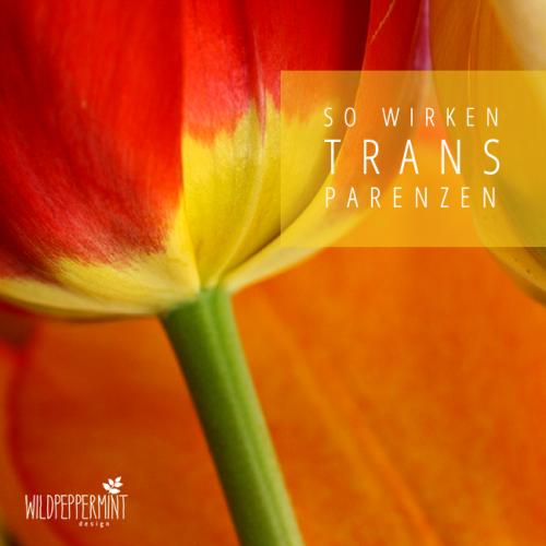 Wie Transparenzen wirken, Typografie und Bilder, Macht der Bilder in der Werbung, tulpen, wildpeppermint-design.de