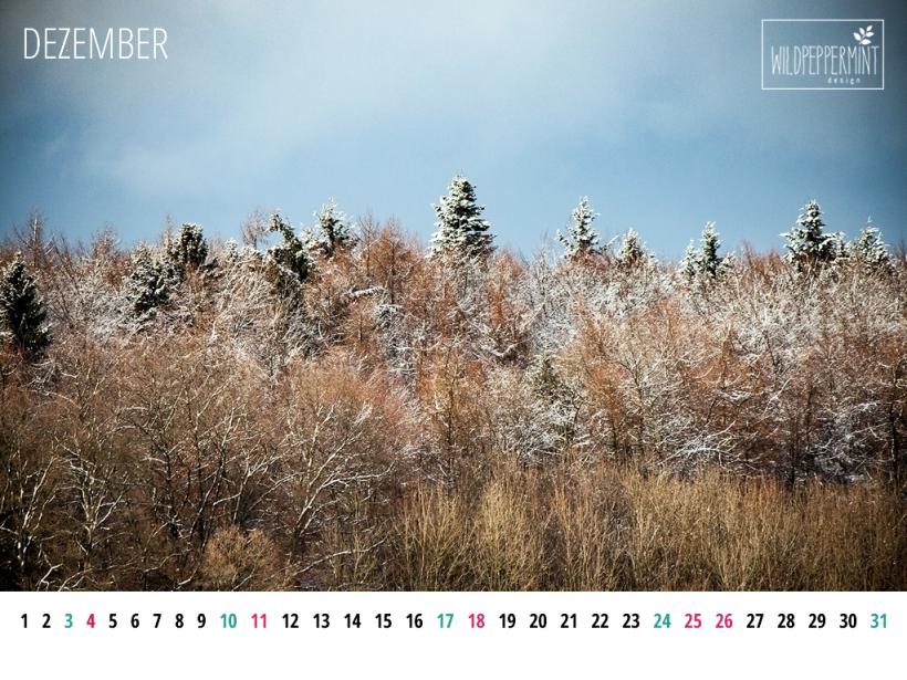 Gratis Wallpaper Winterlicher Wald, Dezember 2016, 1024x768 px, © wildpeppermint-design.de