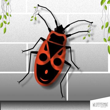 Illustration Feuerwanze, auf der Mauer eine kleine Wanze© wildpeppermint-design.de