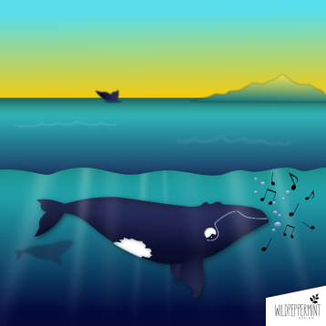 Wal Illustration, singender Wal, Vectorgraphic, Grafische Illustration, wildpeppermint-design