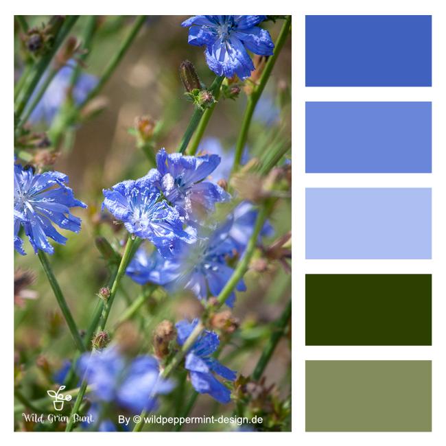 Farbpalette, grün, blau, Corporate Design, Naturprodukte