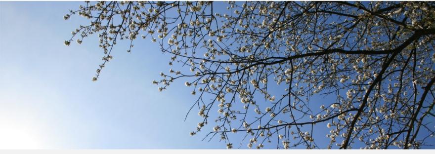 Zen-Style, Zen-Design, Frühling, Licht, Sonne